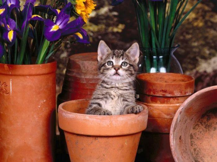 фото cats72
